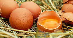 Application: A market study on the quality characteristics of eggs from different housing systems